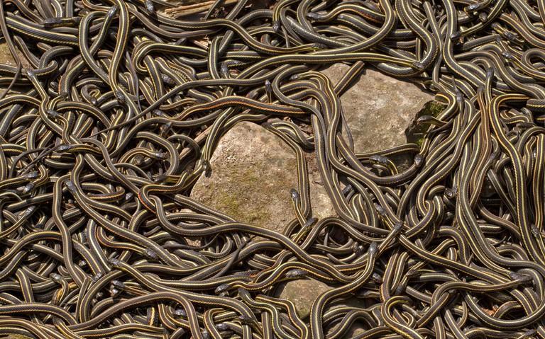 Snakes | © Jukka Palm / Shutterstock