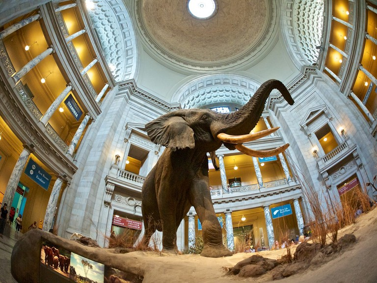 Smithsonian National Museum of Natural History | © Don DeBold / Flickr
