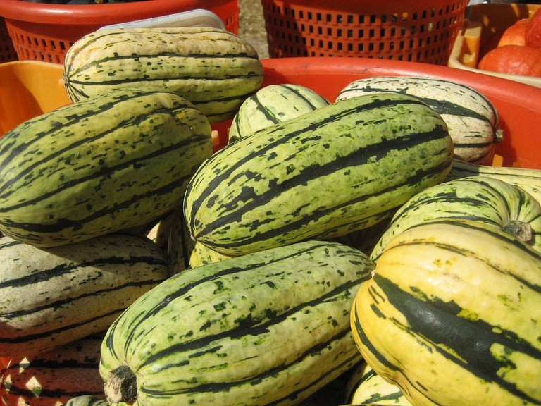 Watermelon-sized squash