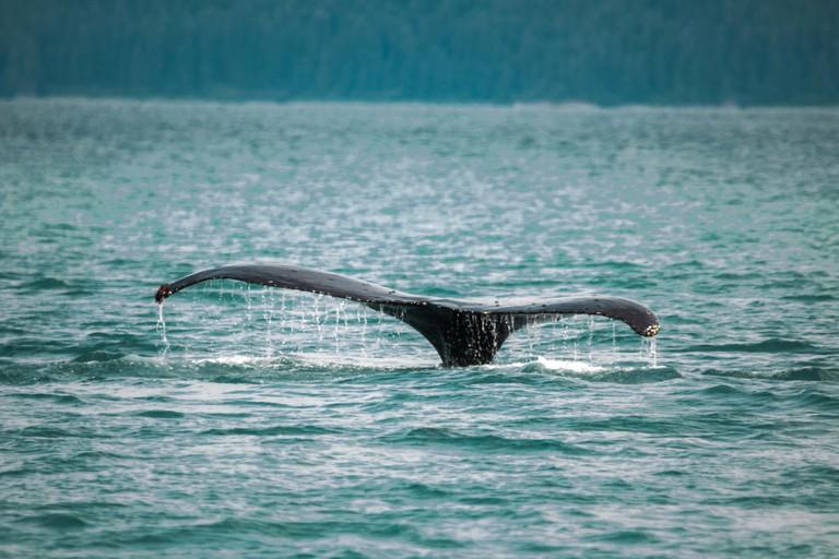 Winter is whale season in Cape Town