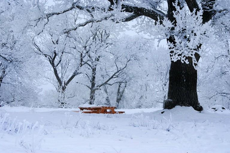 A winter picnic, perhaps?
