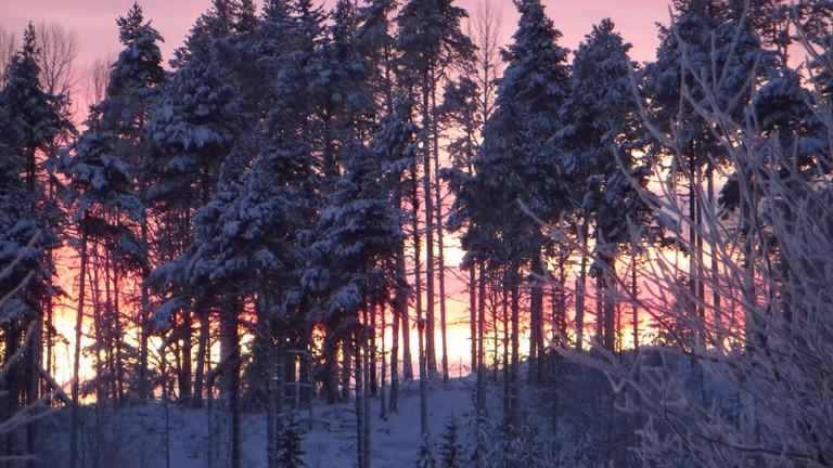December forests