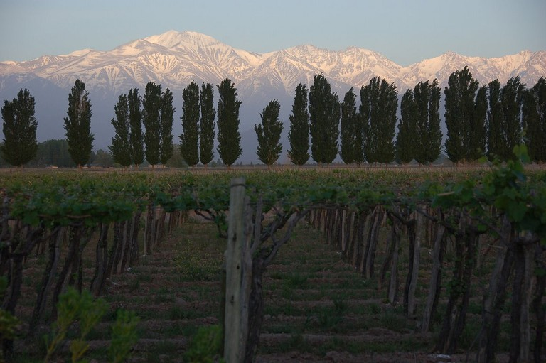 Mendocino vineyards against the backdrop of the Andes