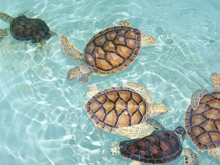 Xcaret sea turtles