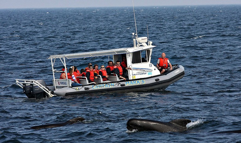 The Best Whale Watching Experiences in Nova Scotia