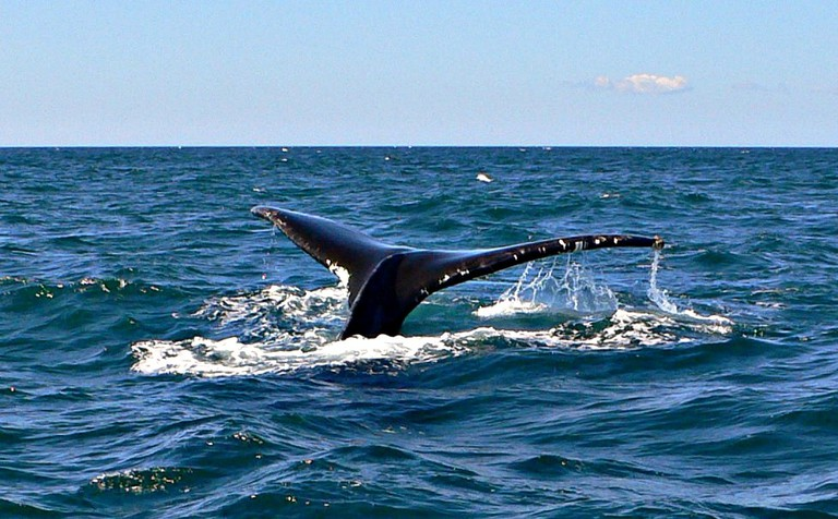 Top 20 Attractions in Nova Scotia