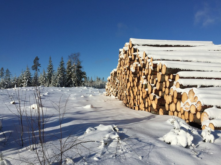 Snow covered logs / VMHolding / Pixabay