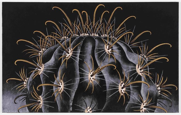 Ferocactus Peninsulae V. Viscainensis 1997-98