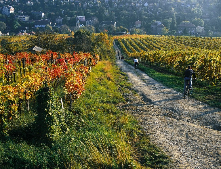 The vineyards surrounding the city. Vienna boasts some incredible green spaces