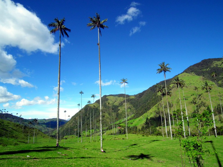 Cocora Valley, Colombia│Chris Bell / © Culture Trip