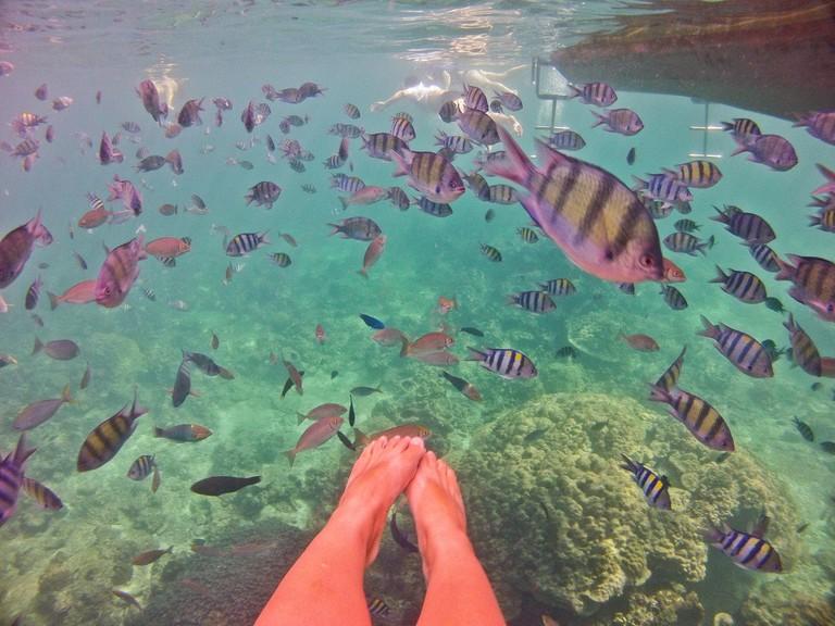 Stunning marine life, Koh Phi Phi