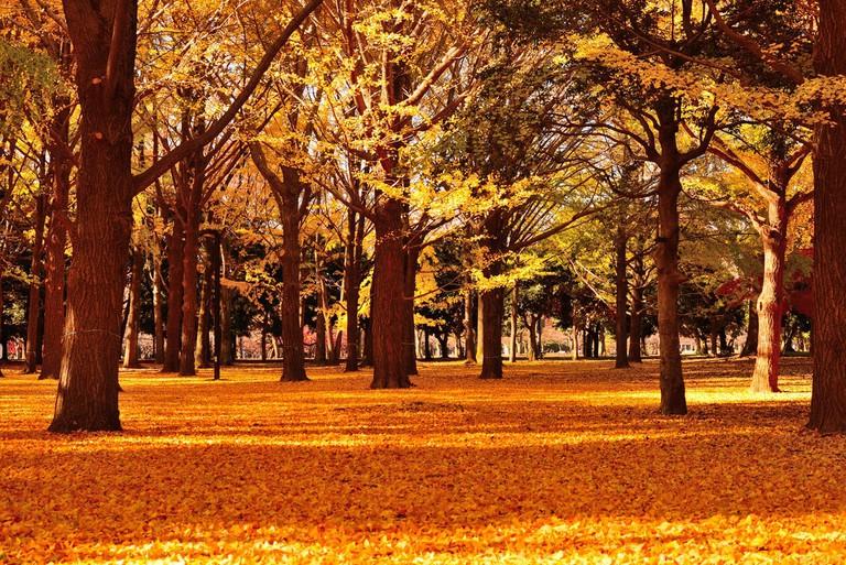 Autumn comes to Yoyogi Park