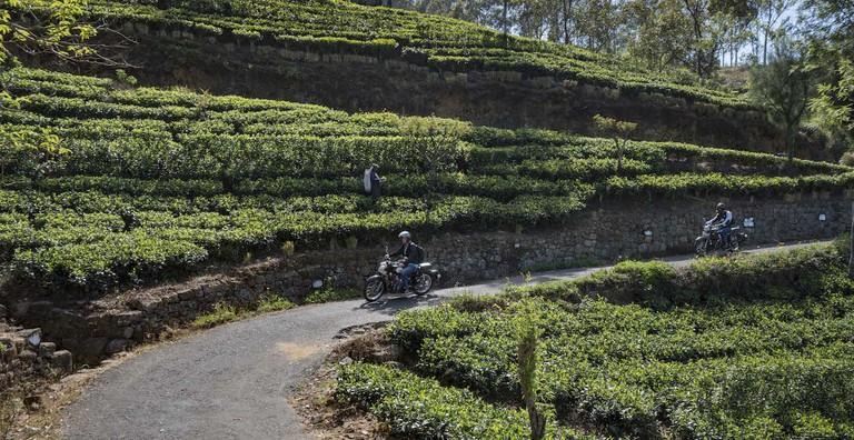 Riding next to the tea plantations