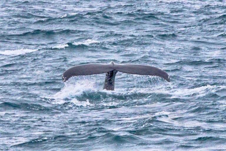 Whale Watching in Reykjavik   © ctraltdileep/Flickr