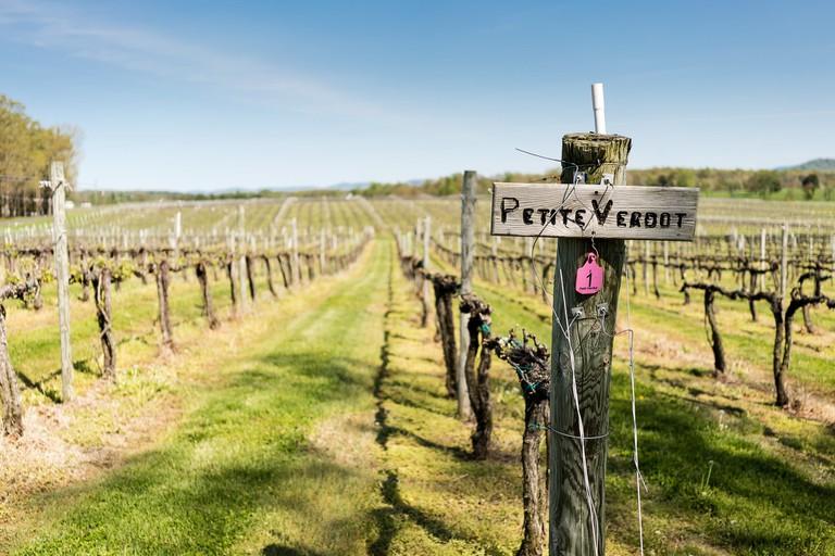 Petite Verdot vines | © Karen Blaha/Flickr