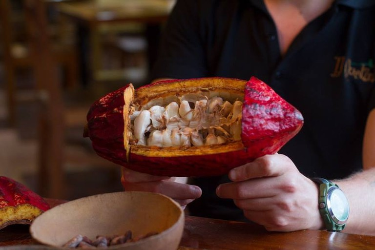 Cacao | © Vibeke Johannessen / Courtesy of The Viking Abroad
