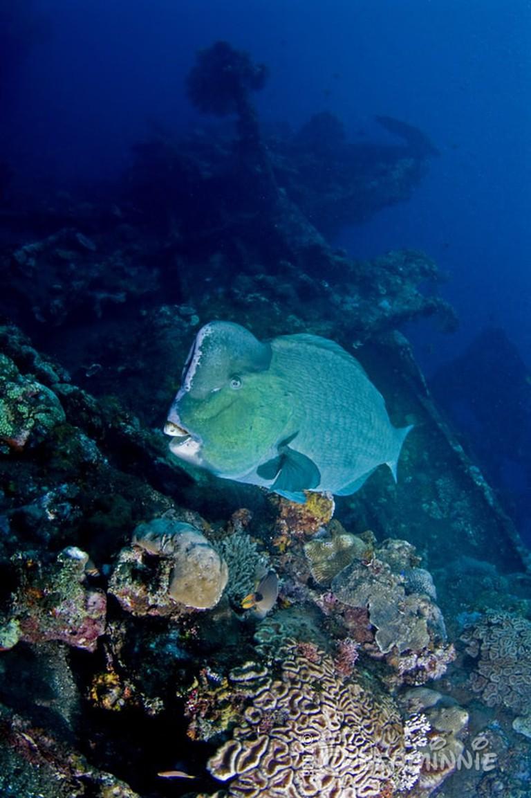 Ship wreck in Tulamben, Bali