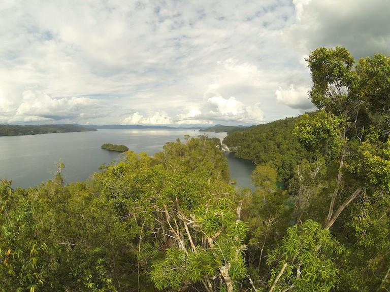Raja Ampat's lush forest