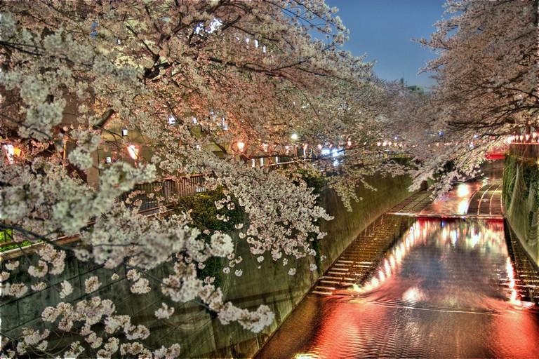 Nakameguro in the evening during the sakura matsuri