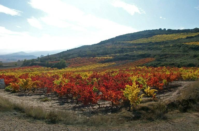 Vineyard in November