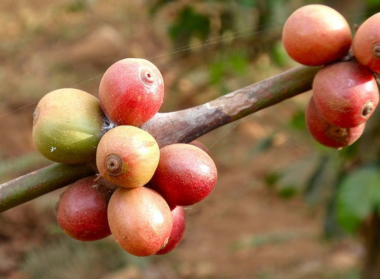 Coffee Beans | © John Pavelka/Flickr
