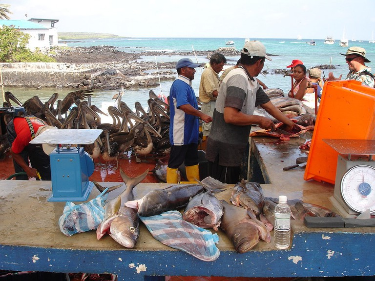 Galapagos Fish Market | © Michael McCullough / Flickr