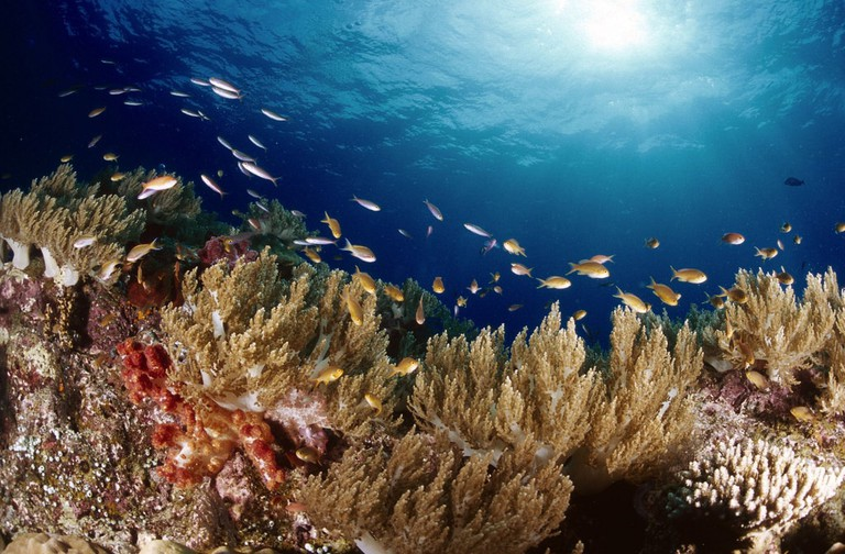 Coral garden in Indonesia