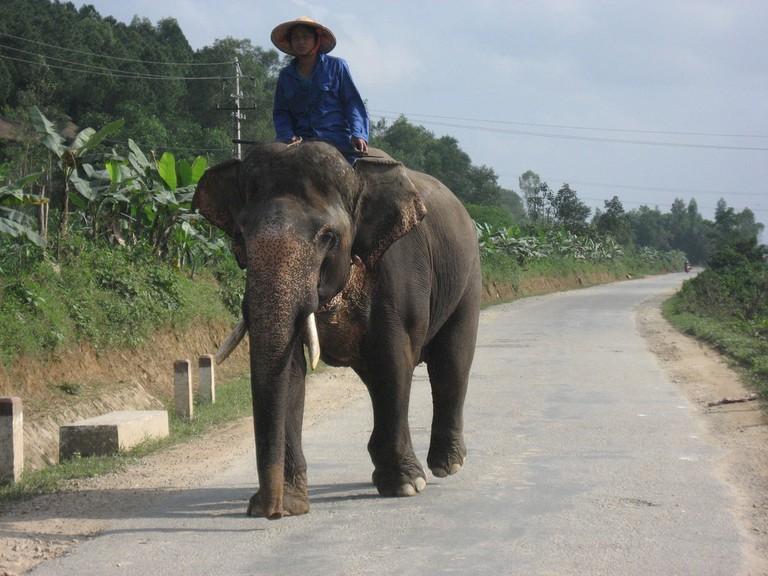Indian Elephant near Hue | © Arian Zwegers/Flickr