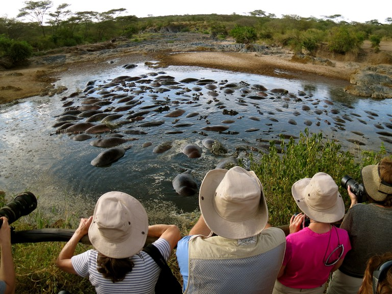 Serengeti Hippo Pool