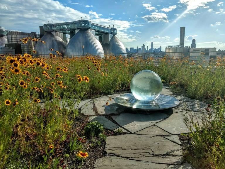 Brooklyn Kingsland Wildflowers Green Roof