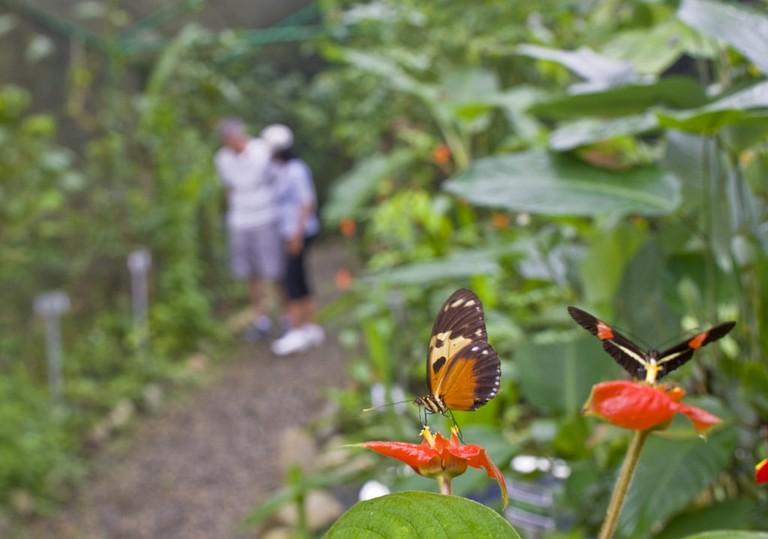 Butterfly Farm in Gamboa, Panama