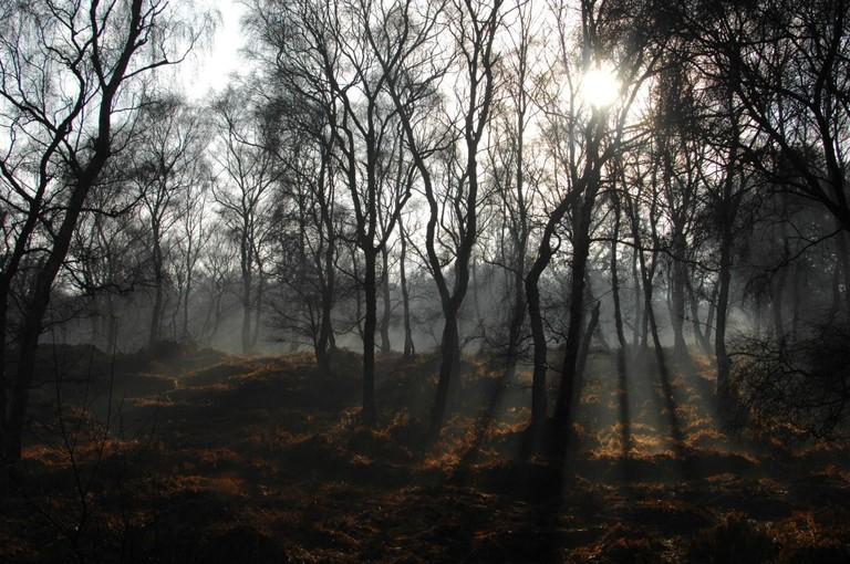 English woods