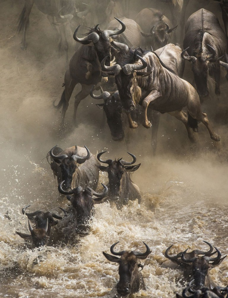 Crazy-Things-You-Have-To-Do-in-Africa_Great-migration