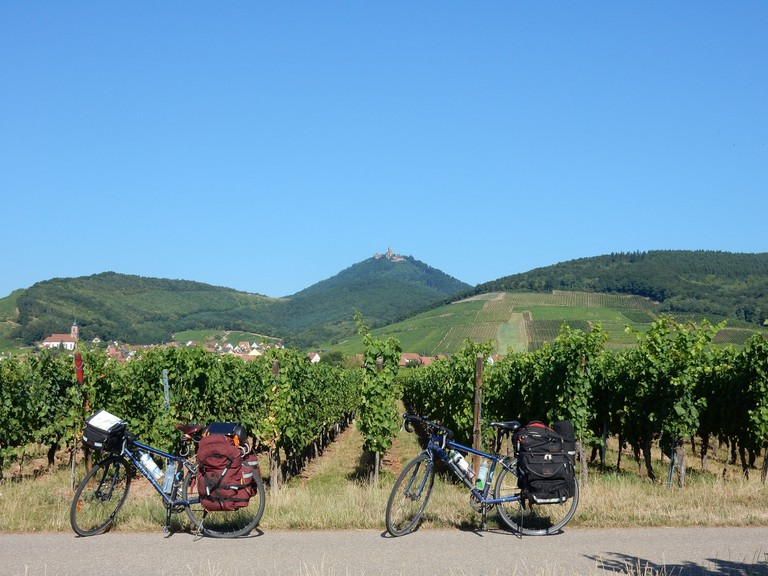 Cycling across vineyards