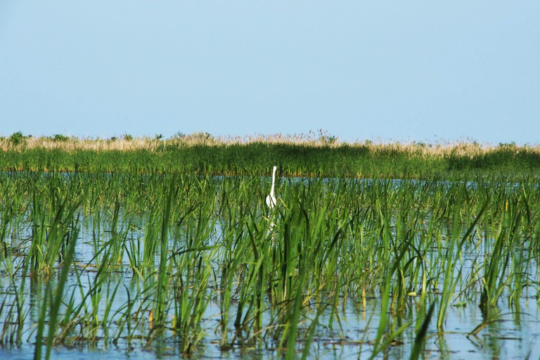 Birdwatching in Danube Delta