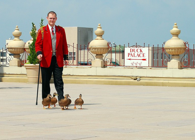 Peabody Duck Master with The Peabody ducks