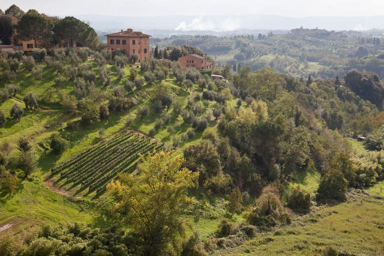 A smallholding with vineyard and olive trees on a green hillside outside Siena, Tuscany, Italy. Mandatory credit Jo Whitworth