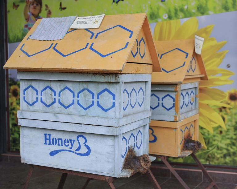 Bee hives at Happy Bee Farm