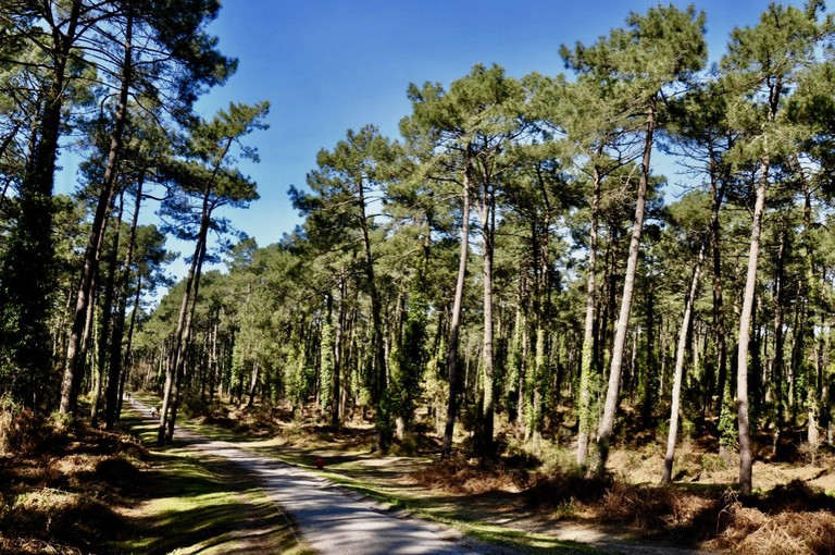 Have a relaxing run in the Pignada forest in Anglet ©Tonio del Barrio 6464:WikiCommons
