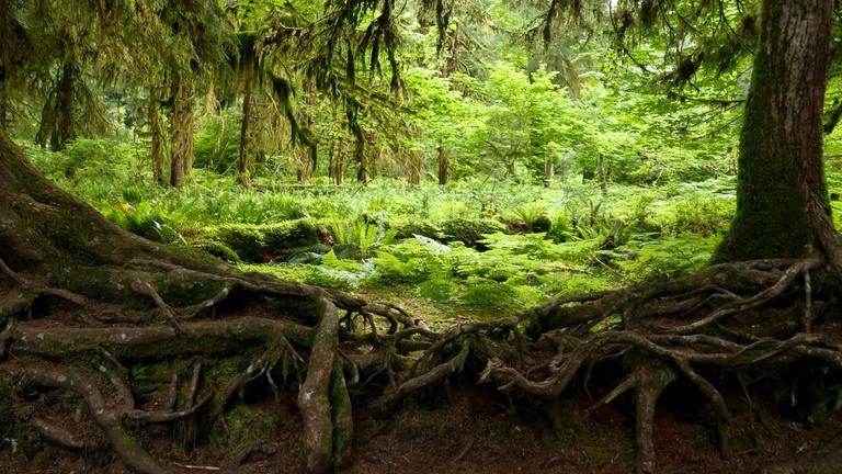 Hoh Rainforest   © Aryeh Alex / Flickr