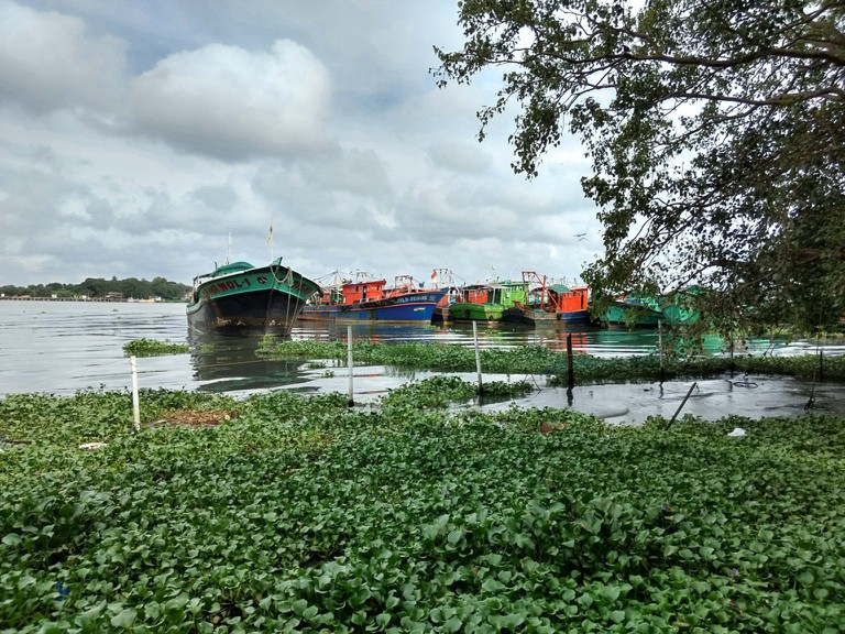 Kochi's landscape is full of lush green trees and plants