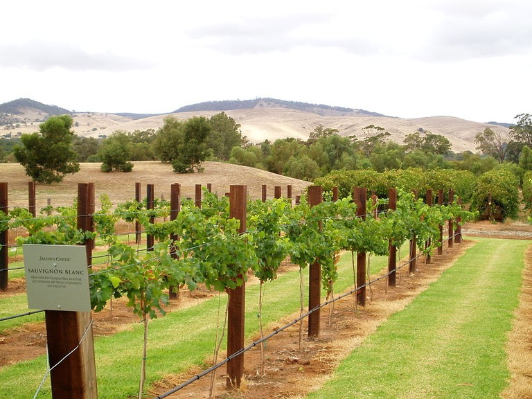 Jacob's Creek vineyard, Barossa Valley | © Amanda Slater/Wikimedia Commons