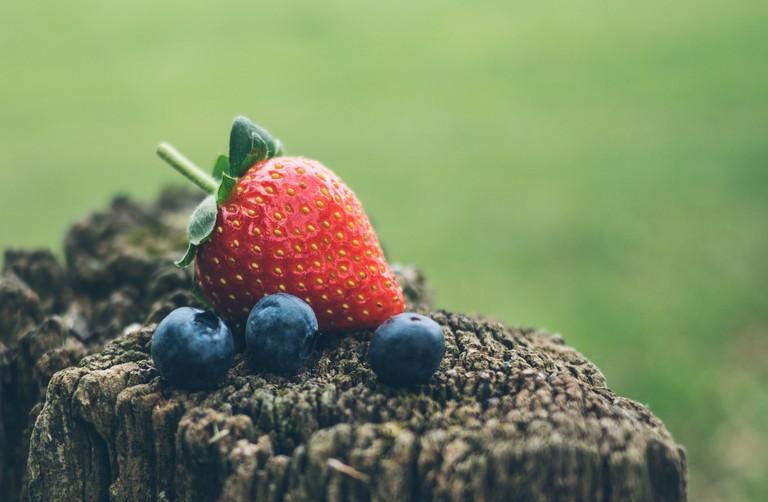 Picking your own berries