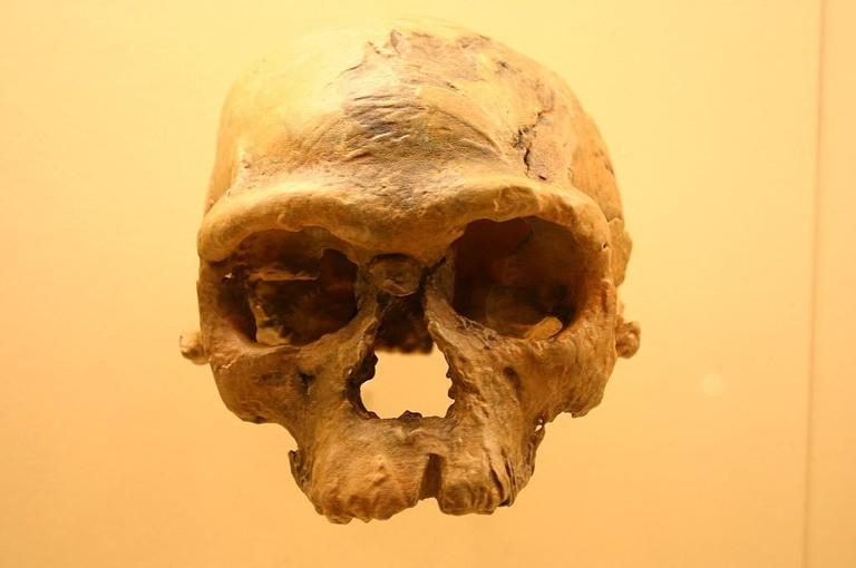 Fossil of Jebel Irhoud