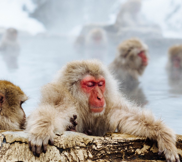 Watch snow monkeys bathe in the 'onsen' to keep warm in Japan's 'hell valley'  | © Matthew Kane / Unsplash