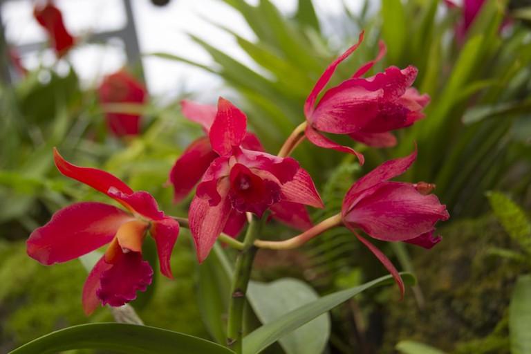Ecuadorian orchids   © Vibeke Johannessen / Courtesy of The Viking Abroad