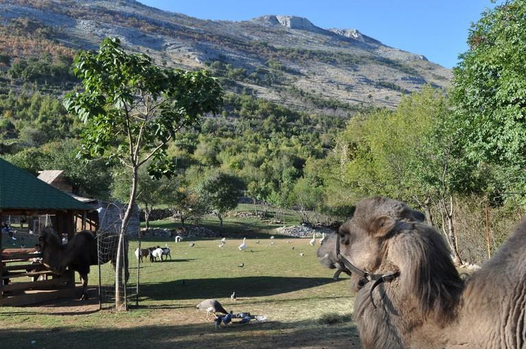 Montenegro Animal Sanctuary | © Helen Kok/Montenegro Pulse