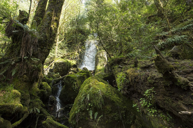 Olympic National Forest | © Kyle Greenberg / Flickr