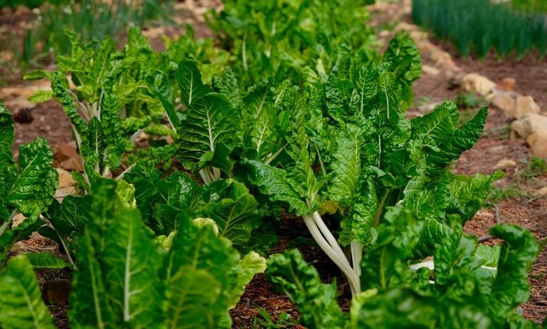 Streetscapes vegetable farm at Trafalgar School