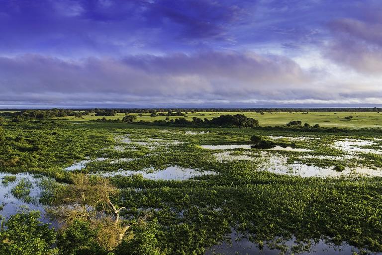 Pantanal | © Filipefrazao/WikiCommons